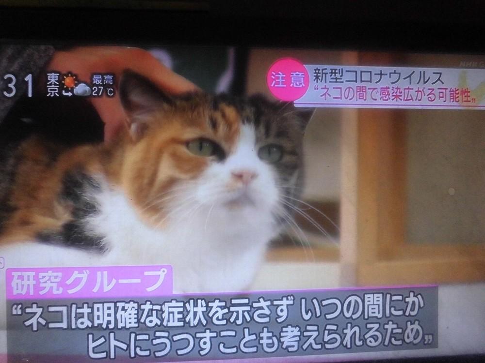 新型コロナウイルスはネコにも感染するゾ!!